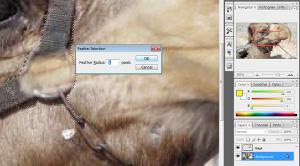 Photoshop Cs3 Yeni Bir Hayvan Türü | mintik.com