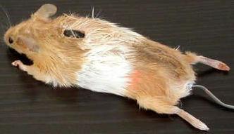 dhtml mouse whel1 MouseWheel